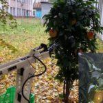 Весной 2021 года российские ученые протестируют робота для сбора яблок