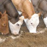 Госрегистрацию кормовых добавок будут регулировать два новых законопроекта