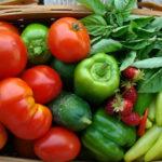 В Подмосковье будет собрано около 100 тыс. тонн тепличных овощей