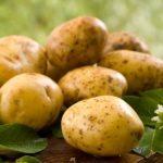 «Больше, чем во всей Беларуси!»: Семашко в шоке от урожая картошки в Брянской области