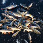 Разводить рыбу на лесных участках будет разрешено в России