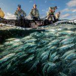 В кабмине оценят эффективность мер поддержки рыболовов и проработают новые