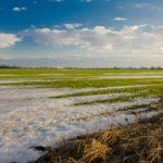 В Ингушетии рассчитывают на увеличение урожая озимых на 45%