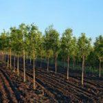 Около 1750 гектаров молодых садов заложат в Краснодарском крае