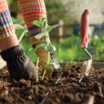 Более 130 га новых садов заложено в Таджикистане с начала года