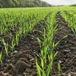 Площадь сева яровых культур в Коломне в 2021 году увеличится на 820 га
