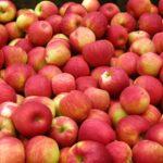 На Ставрополье в 2021 году ожидают рекордный урожай яблок
