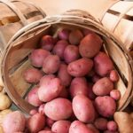 Беларусь не оставит Россию без картофеля — Минсельхозпрод