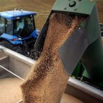Кабмин поддержал обновление госфонда зерна