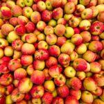 Ставрополье ожидает рекордный урожай яблок в 2021 году