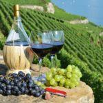 Россельхознадзор проверит технологии изготовления импортной винодельческой продукции