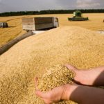 Аграрии России собрали около 35 млн тонн зерна