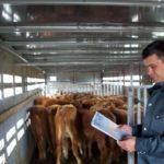 Россельхознадзор сообщил о возможном запрете ЕС на ввоз животных из России