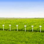 Минсельхоз разрабатывает подпрограмму по развитию селекции и переработки зерновых культур