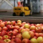 Россельхознадзор снимает ограничения на ввоз яблок из Белоруссии с 20 августа