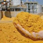 Завод по производству кормовых добавок появится в Нижегородской области